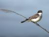 thumb REED BIRD DSC_0045-1