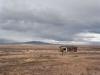 Along i80, Nevada - Alfa 18 (4)_preview