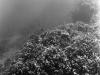 Puako Reef - Alfa 18_preview