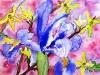 "Purple Iris, Watercolor, 10\""x12\"", Hana Aviv"