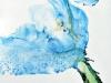 jhawaka_retro_blue-dahlia-075