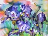 Abstract Irises