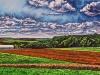 Palser-Field-of-harvest