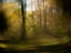 01_Autumn Haze_Carl Geisler_preview (1)