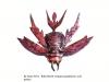 By-Dario-Silva-Ruby-Beetle