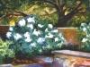 Hydrangea-Song