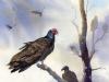 13_Turkey-Vultures