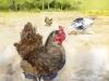 14_A-Handsome-Chicken
