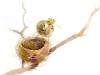 2_Sparrows-Nest