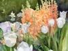 9_Tulips-Foxglove-Longwood-Gardens