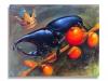 5-King-Beetle