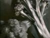 Broccoli, Black & White, oil, 12x9, Jo Bradney