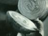 Onion, Black & White, oil, 12x9, Jo Bradney