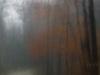Autumn-Road-sColor-Space